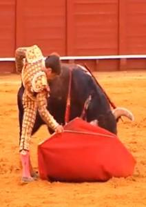 Juli codileando para acercar toro R